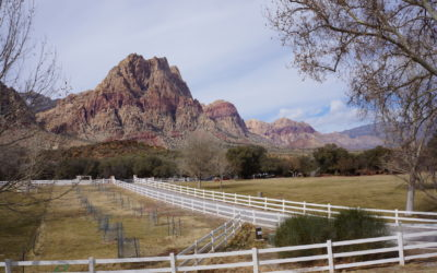 Spring mountain ranch